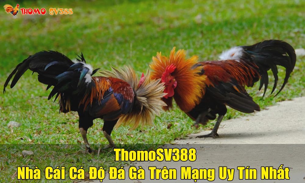 Giới thiệu nhà cái cá cược ThomoSV388